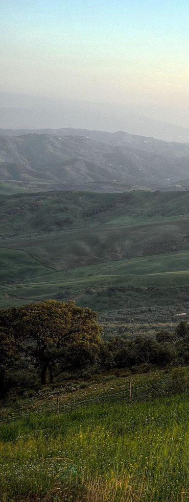 landscape premillennial long